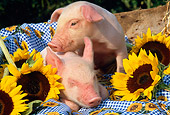 PIG 02 LS0002 01