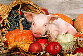 PIG 02 LS0020 01