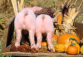 PIG 02 LS0022 01