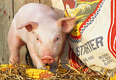 PIG 02 LS0040 01