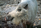 PIG 02 LS0048 01