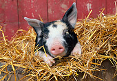 PIG 02 LS0057 01