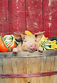 PIG 02 LS0058 01