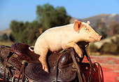 PIG 02 RK0026 04