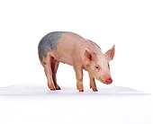 PIG 02 RK0094 05