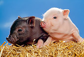 PIG 02 RK0134 06