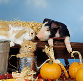 PIG 03 RS0001 02