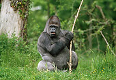 PRM 01 GL0005 01