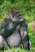 PRM 01 GL0007 01