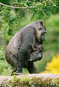 PRM 01 GL0014 01