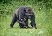 PRM 01 GL0017 01