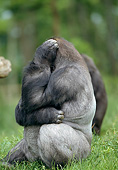 PRM 01 GL0018 01