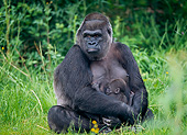 PRM 01 GL0022 01