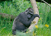 PRM 01 GL0023 01