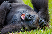 PRM 01 KH0010 01