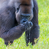 PRM 01 KH0013 01