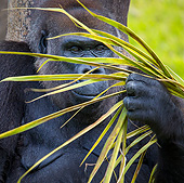 PRM 01 KH0014 01