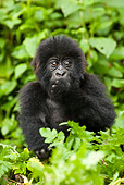 PRM 01 MC0001 01
