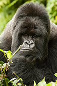 PRM 01 MC0007 01