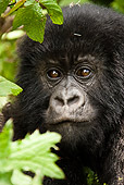 PRM 01 MC0008 01