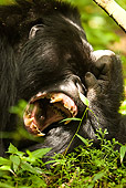 PRM 01 MC0011 01