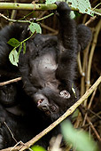 PRM 01 MC0013 01