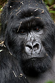 PRM 01 MC0015 01