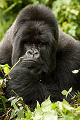 PRM 01 MC0018 01