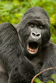 PRM 01 MC0019 01