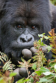 PRM 01 MC0024 01