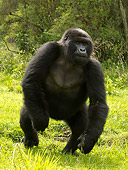 PRM 01 MC0025 01