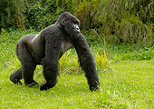 PRM 01 MC0028 01
