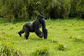 PRM 01 MC0029 01