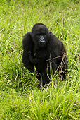 PRM 01 MC0031 01