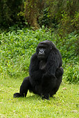 PRM 01 MC0032 01