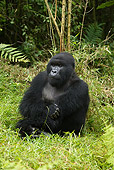 PRM 01 MC0034 01