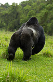 PRM 01 MC0035 01