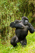 PRM 01 MC0036 01
