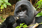 PRM 01 MC0040 01