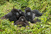 PRM 01 MC0043 01
