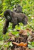 PRM 01 MC0046 01