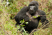 PRM 01 MC0048 01