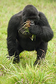 PRM 01 MC0053 01