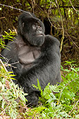 PRM 01 MC0056 01