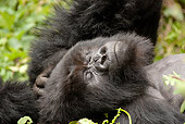 PRM 01 MC0058 01