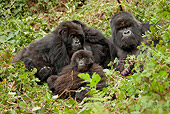 PRM 01 MC0059 01