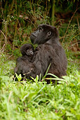 PRM 01 MC0060 01