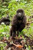 PRM 01 MC0061 01