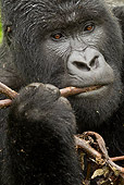 PRM 01 MC0065 01