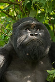 PRM 01 MC0075 01